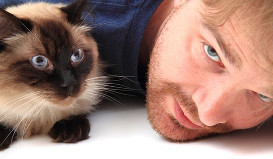We Solve the Top 10 Problems of Cat Parents: Part Two