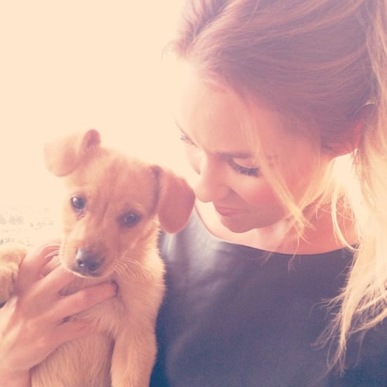 Lauren Conrad Adopts a New Puppy   Pictures