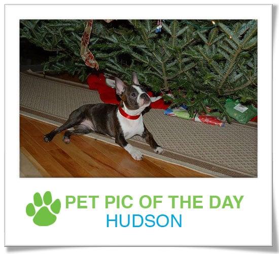 Pet Pics on PetSugar 2008-12-22 09:30:46