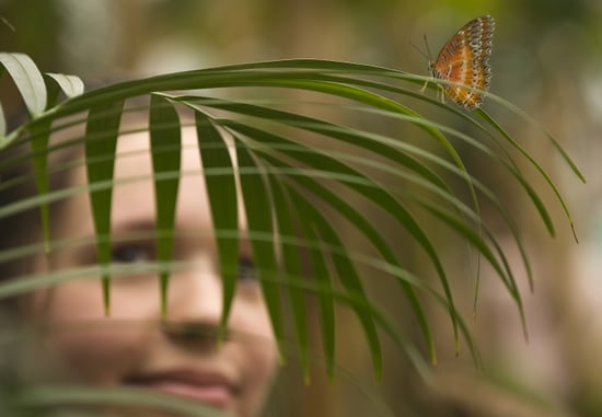 Natural History Museum Butterfly Explorers Exhibition Photo