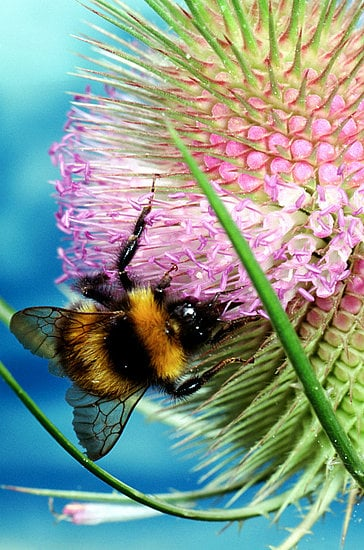 Honey Bees Disappearing, Food Supply in Danger