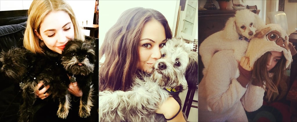 The Pretty Little Liars Love Their Pretty Little Pooches