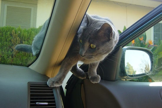 I Need Your Help . . .  Potty Time on Cross Country Cat Drives?
