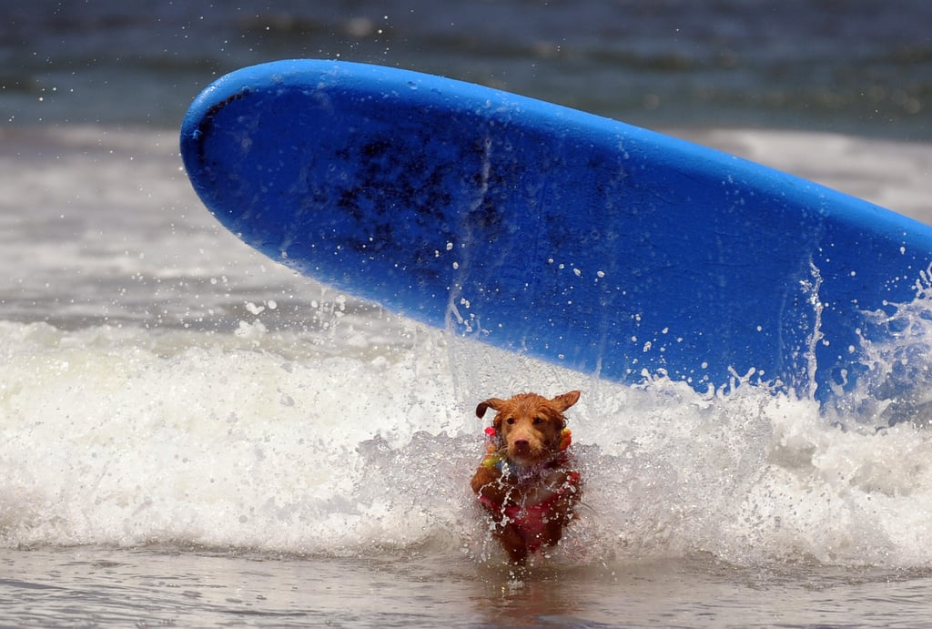 Watch Out for the Longboard, Short Dog