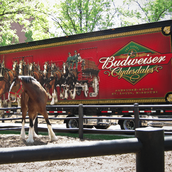 The Best Budweiser Clydesdale and Dog Commercials