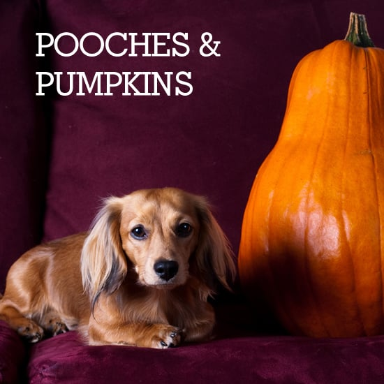 Pictures of Pooches and Pumpkins