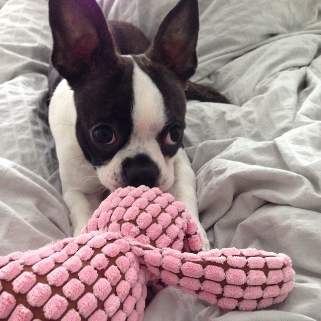 You're just going to give me this toy and then walk away? Not fair.