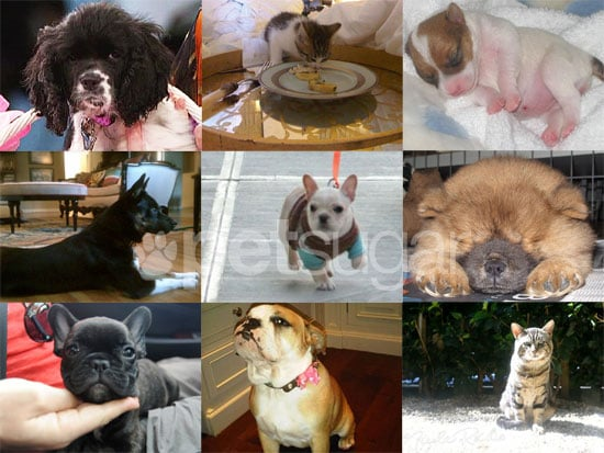 Which Celebrities Got New Pets in 2010?