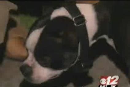 Dog Saves Baby!