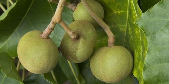 Kukui Nut Oil: 7 Uses For This Ancient Hawaiian Secret