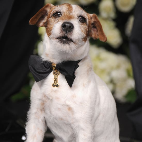 The Artist's Uggie at the Oscars Pictures