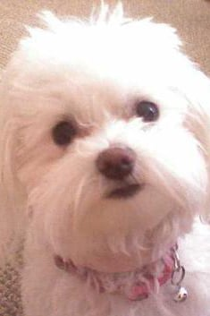Pet Pic of the Day: Chloe