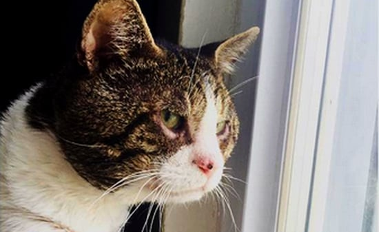 Booger the Feral Rescue Cat Gets His Sight Back via Surgery