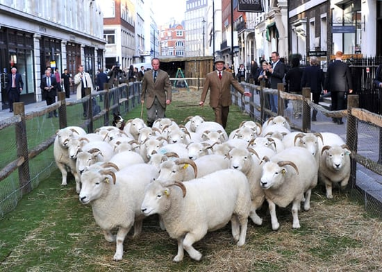 Photos of Sheep in Central London and at Selfridges for the Start of Wool Week