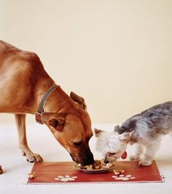 Come Paw-ty With Me: Dog Birthday - Menu (Dog Food)