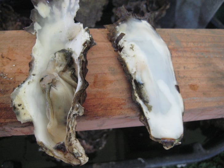 How to Shuck an Oyster