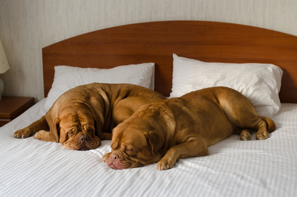 Four-Star Hotel For Your Four-Legged Friend