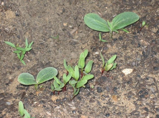 Garden Therapy: Seedling Surprises
