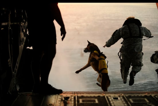 10 Things You Might Not Know About Soldier Dogs
