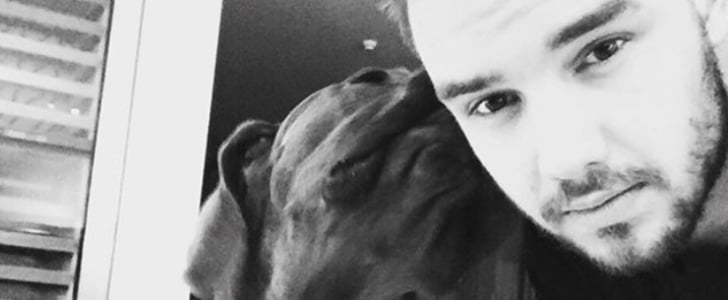 Liam Payne and His Dog Howling at Each Other Will Make Your Day