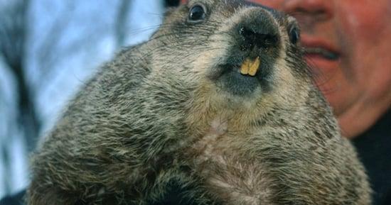Groundhog Punxsutawney Phil Predicts Early Spring