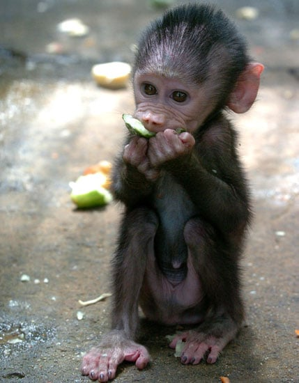 Name This Primate, Baby!