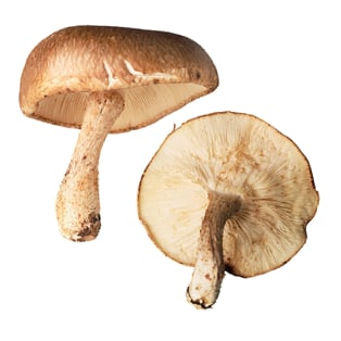 Benefits of Mushrooms For Beauty