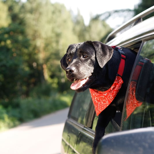 How to Treat Motion Sickness in Pets