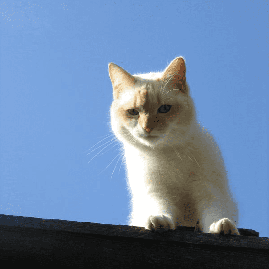 Pictures of Cute Cats on Roofs