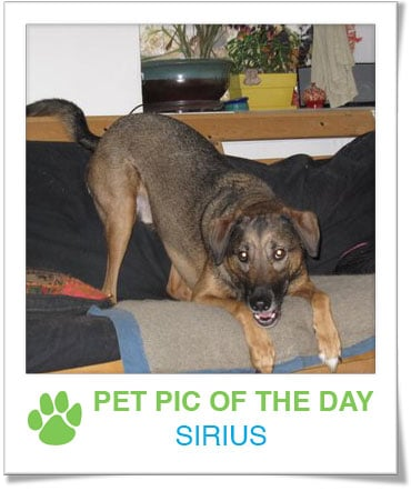 Pet pics on PetSugar 2008-11-26 09:30:08