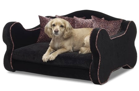 Rock and Roll Pet Bed Spoils Your Rocker Pet