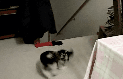 Dog Chases Tail to Rod Stewart Song