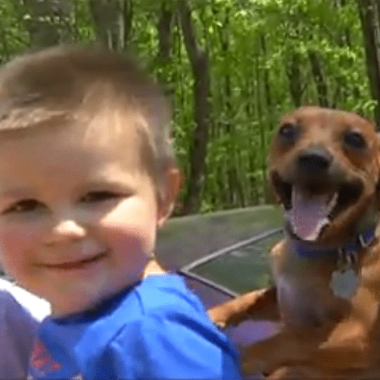 The Family Dog Stayed by This Toddler's Side While He Was Lost in the Woods For 9 Hours