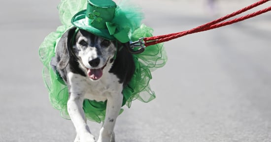 These 15 Photos Are Keeping It Green For St. Patrick's Day