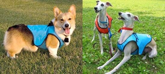 Dog Cooling Vest Beats a Bath Any Day