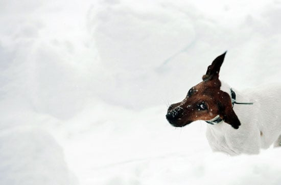 "I Need Your Help . . . My Dog Won't ""Go"" in the Snow!"