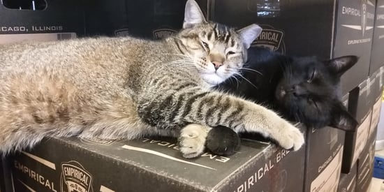 Adorable Kitty Enforcers Handle Brewery's Rodent Problem