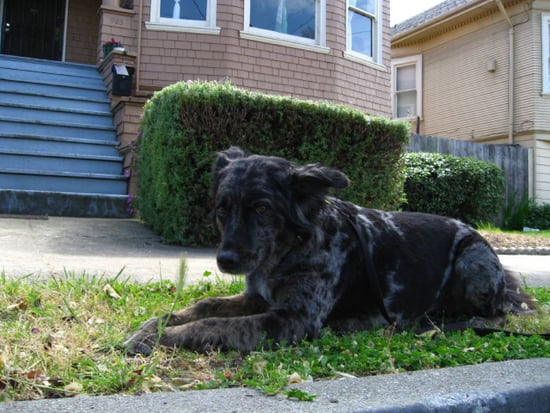 Open House Recap:  Pets and Your Home