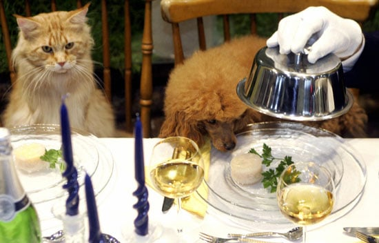 Do Tell: Would You Try to Raise a Vegetarian (or Vegan) Pet?