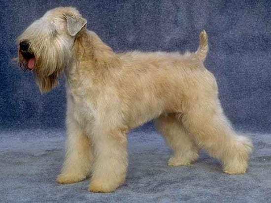 Guess What Breed of Dog?