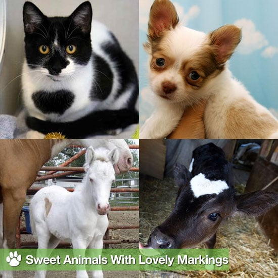 Animals With Heart Markings