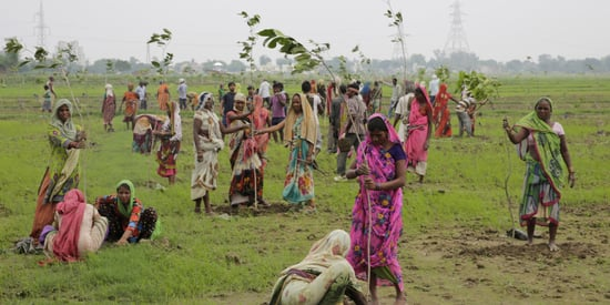 Uttar Pradesh In India Planted Almost 50 Million Trees In Just 24 Hours
