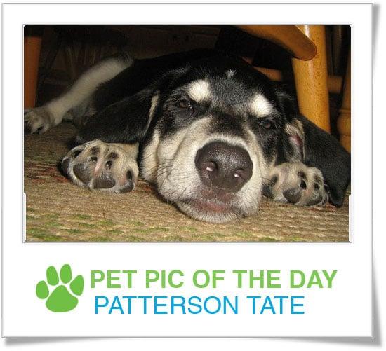 Pet Pics on Petsugar 2008-11-03 07:00:53