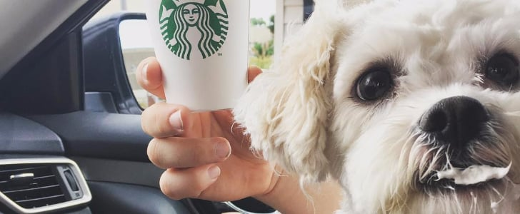 The Sweet Starbucks Treat That's Perfect For Pooches