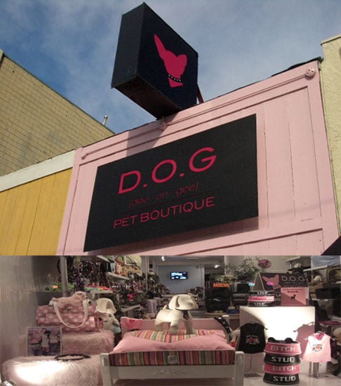 Out and About: D.O.G. Pet Boutique