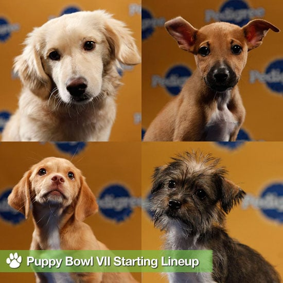 Pictures of Puppy Bowl Dogs