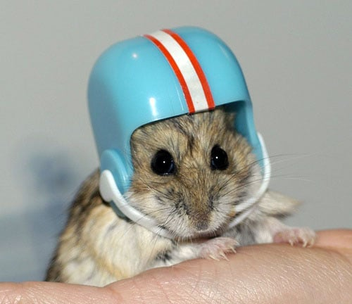 Cute Alert: Hamster Helmet