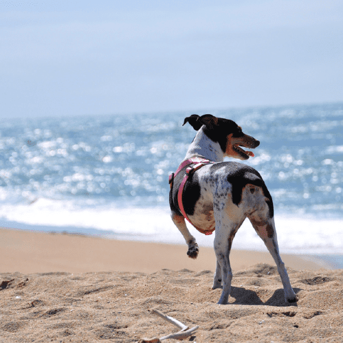 Dangers to Dogs in Summer
