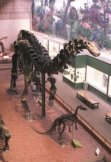 Out and About: Connecticut's Peabody Museum