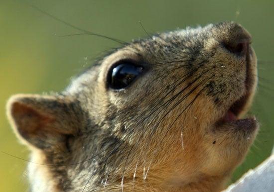 The Scoop: Santa Monica Squirrels Get Birth Controlled